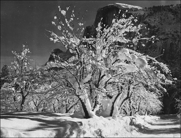 1933-california-yosemite-apple-orchard-half-dome-ansel-adams.jpg